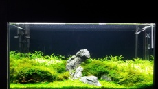 112l - Green Dream Tank - Dominik Piechaczyk