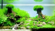 The International Aquatic Plants Layout Contest 2013