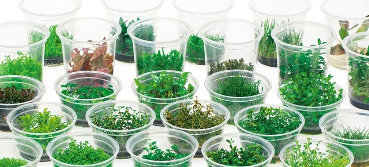 Rośliny in-vitro