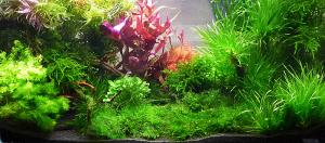 Akwarium roślinne wykonane przez firmę Podwodne Ogrody.