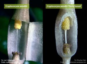 Porównanie budowy kwiatu