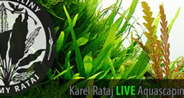 Karel Rataj LIVE Aquascaping Contest