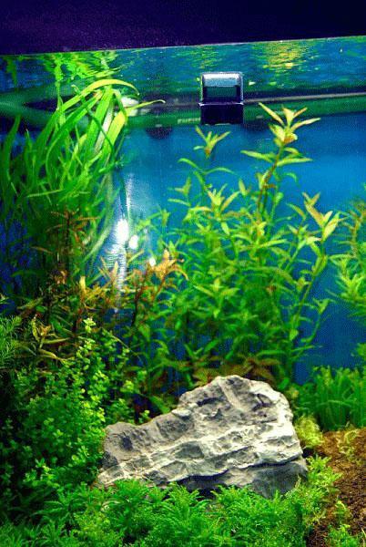 Haustierbedarf Dropchecker Co2 Dauertest Für Aquarium Billigverkauf 50%