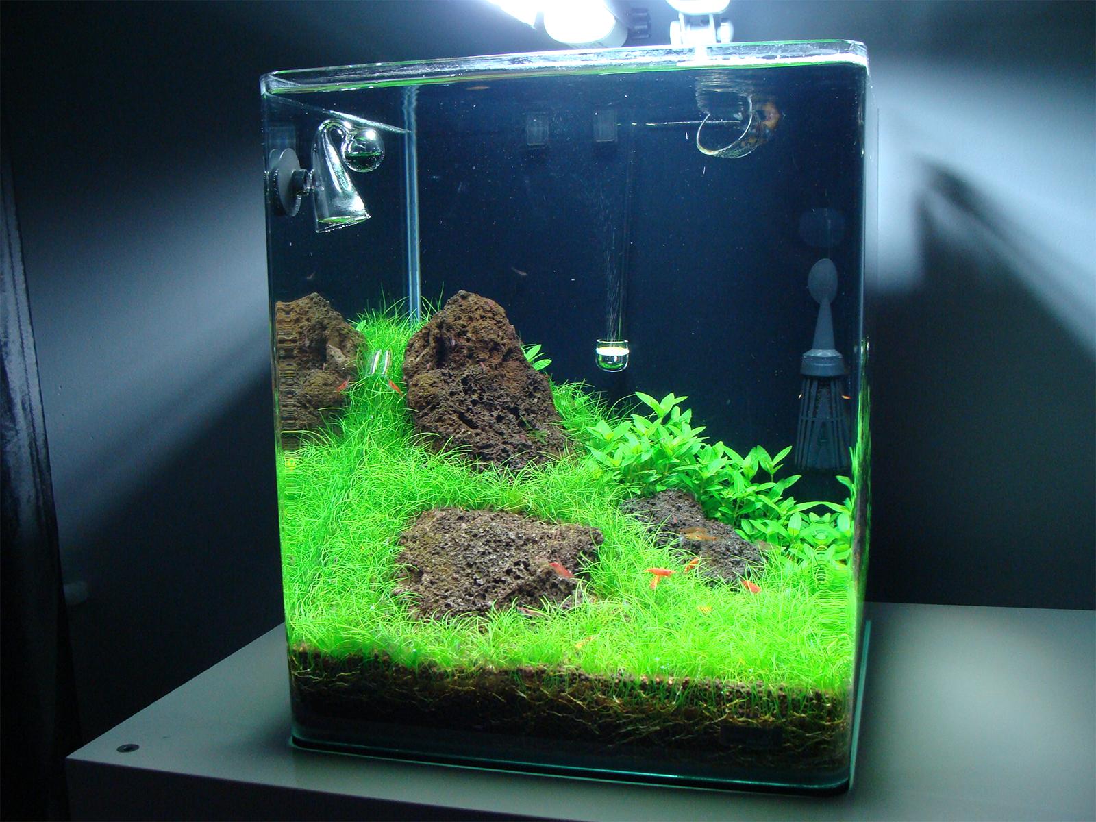 нано аквариум картинки подходит