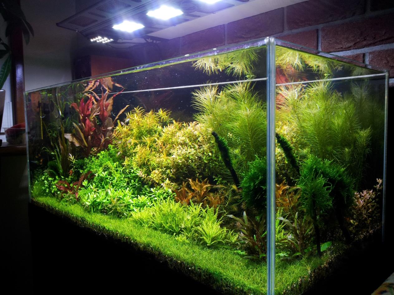 Un altro acquario olandese for Comprare un acquario