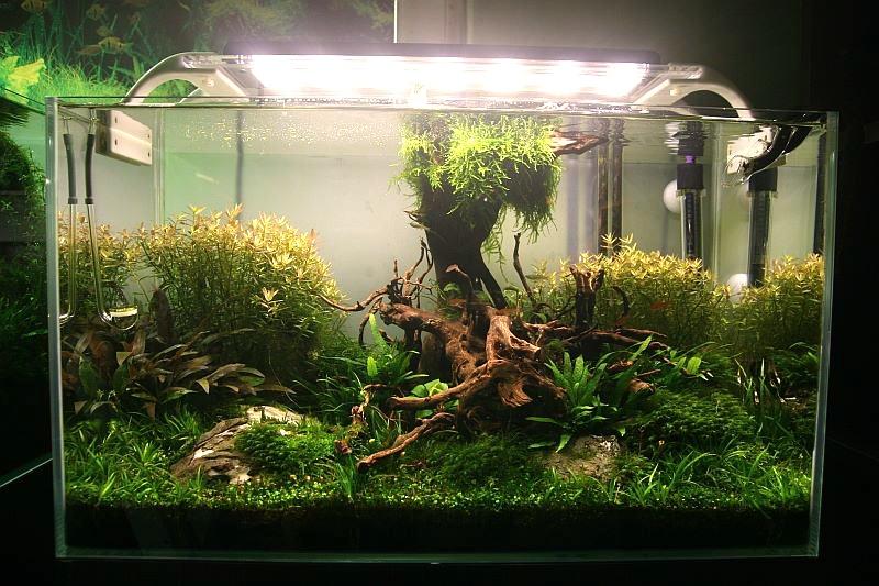 Oświetlenie Led W Akwarium Plusy I Minusy