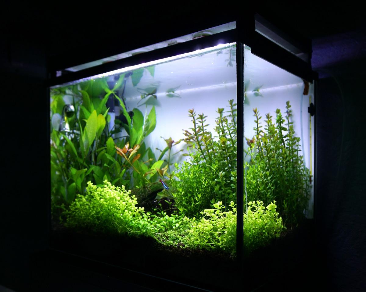akvarie 30 liter